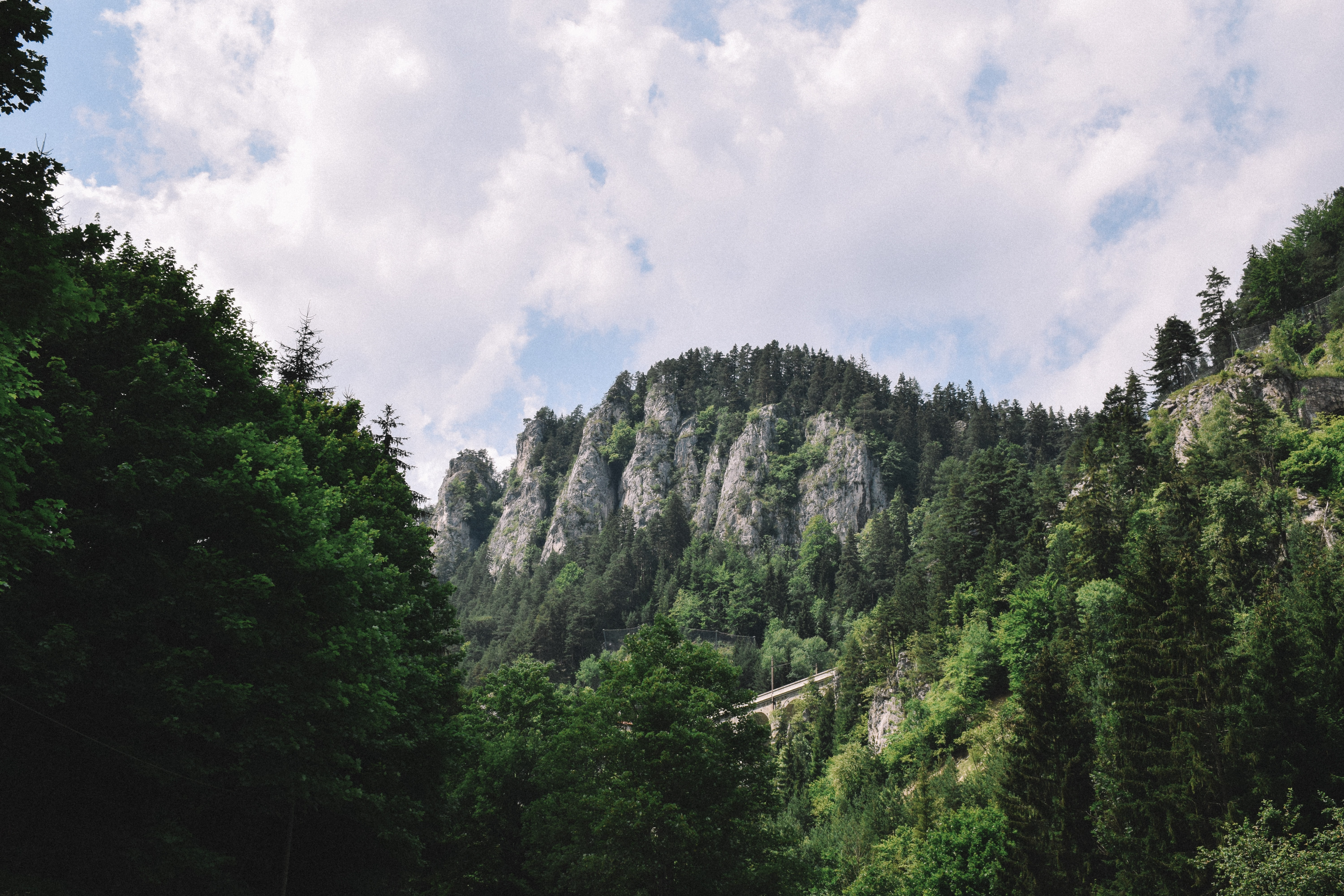 landscape photography of green trees and mountain