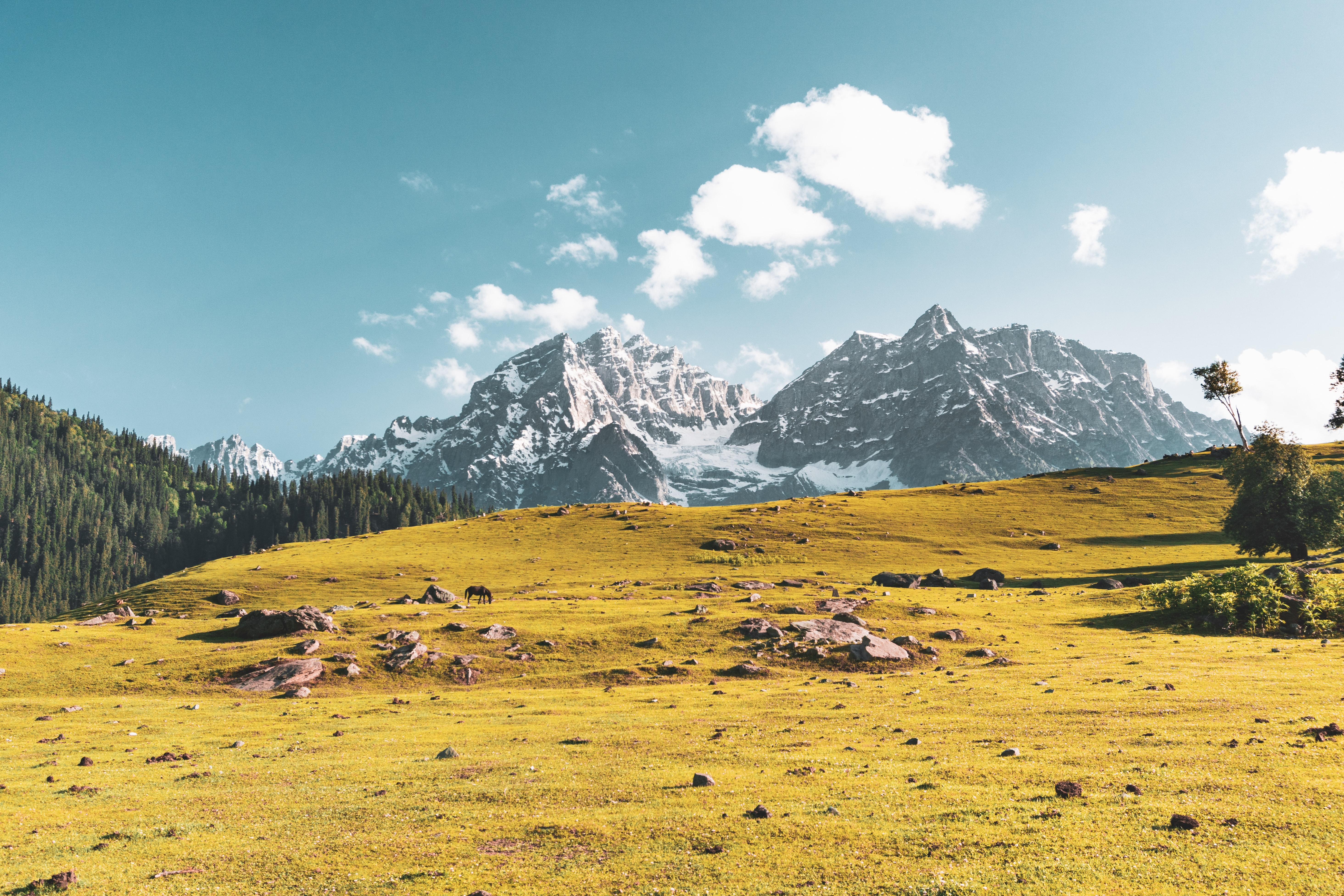 landscape photography of yellow grass field and mountain