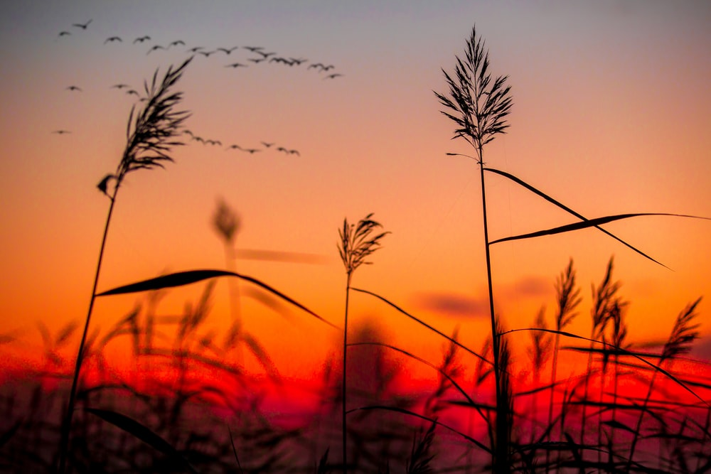 silhouette photography of plants