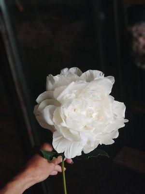 3884. Virágok