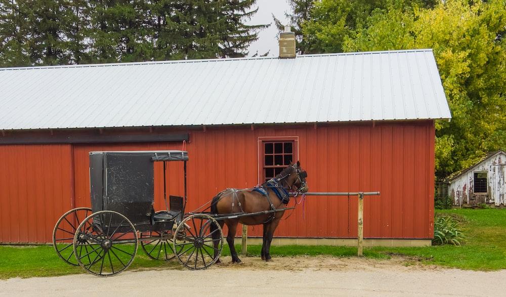 horse beside building