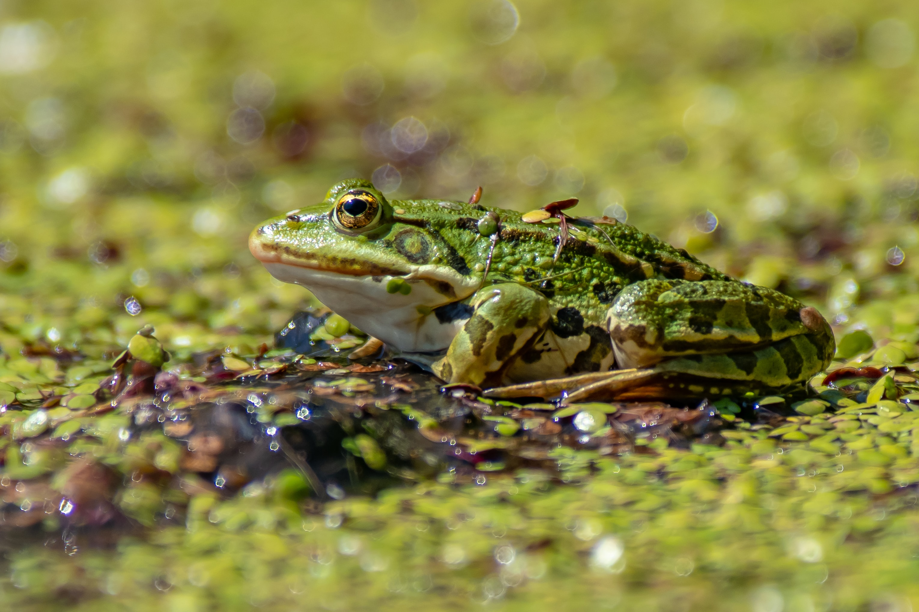 green and yellow toad on brown surface