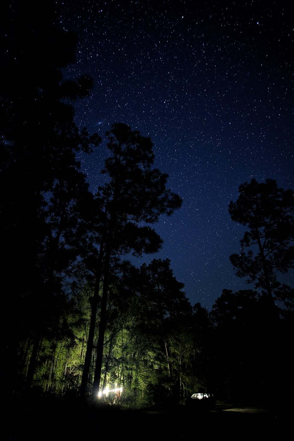 lighted flashlights under tall trees during night time