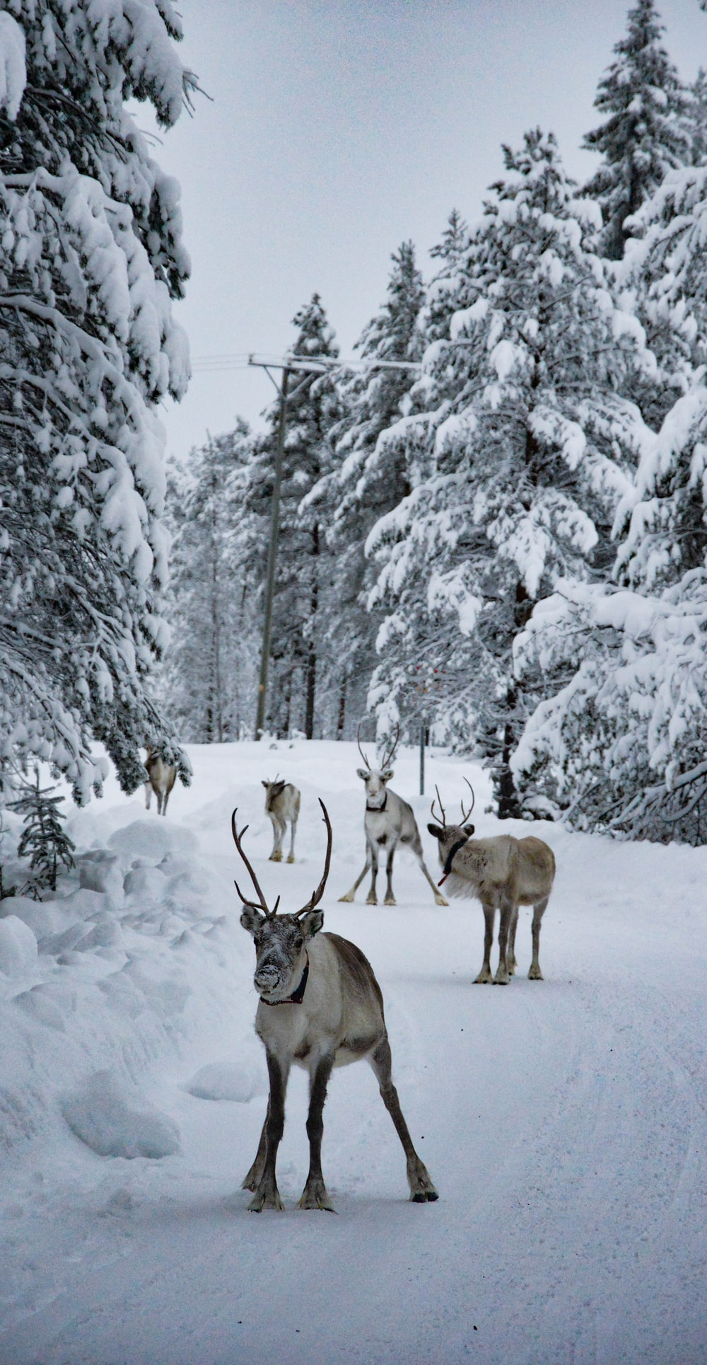 group of deer at snowfield