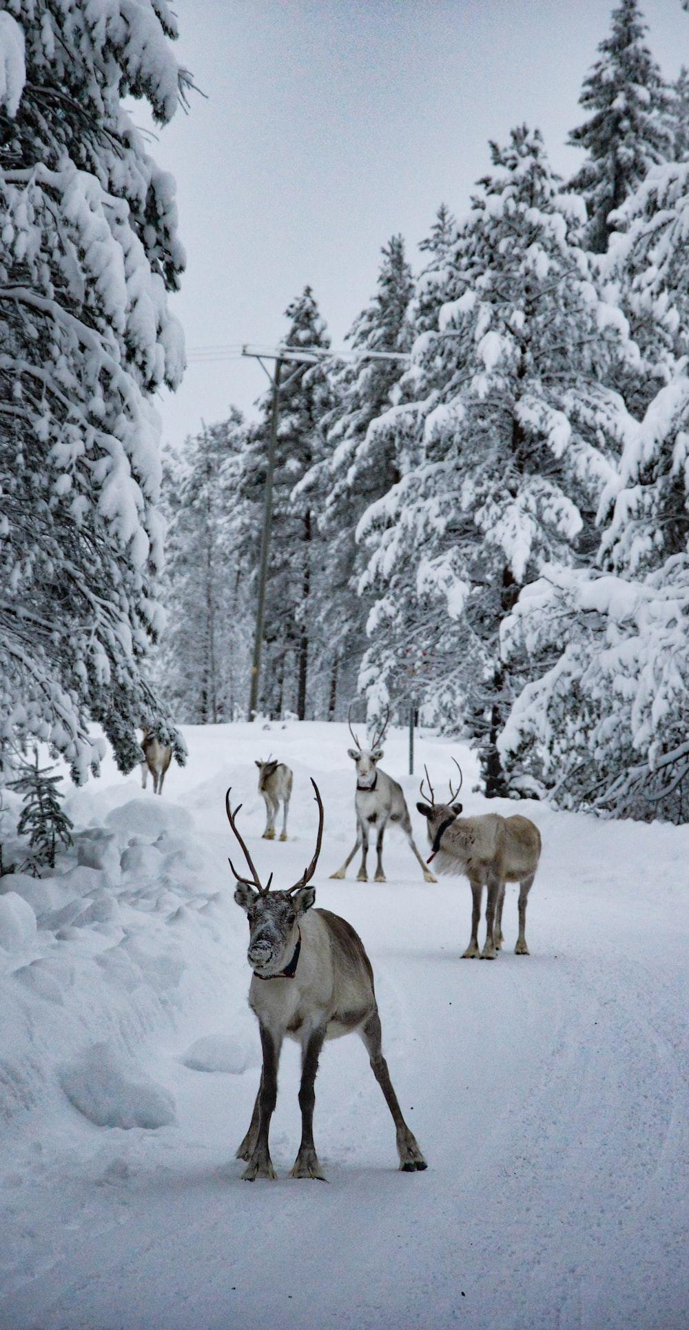 group of deer at snowfield