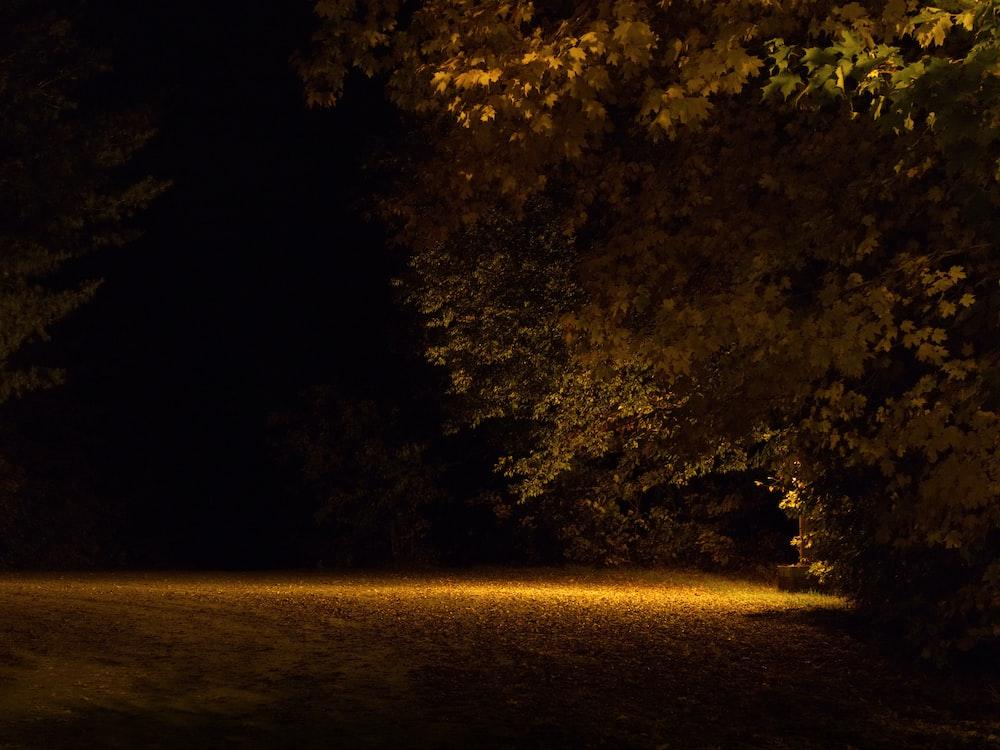 trees beside post light