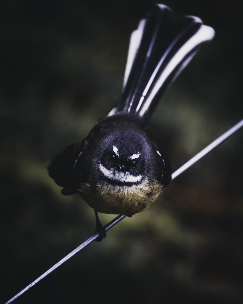 black and brown small beaked bird on white wire