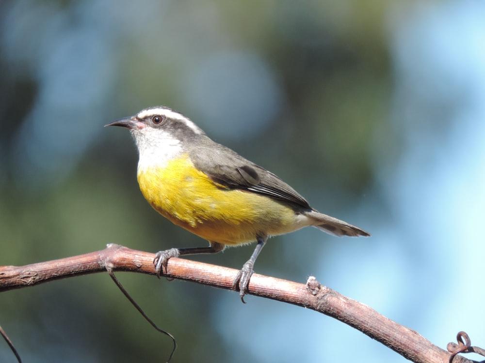 white, gray and yellow bird