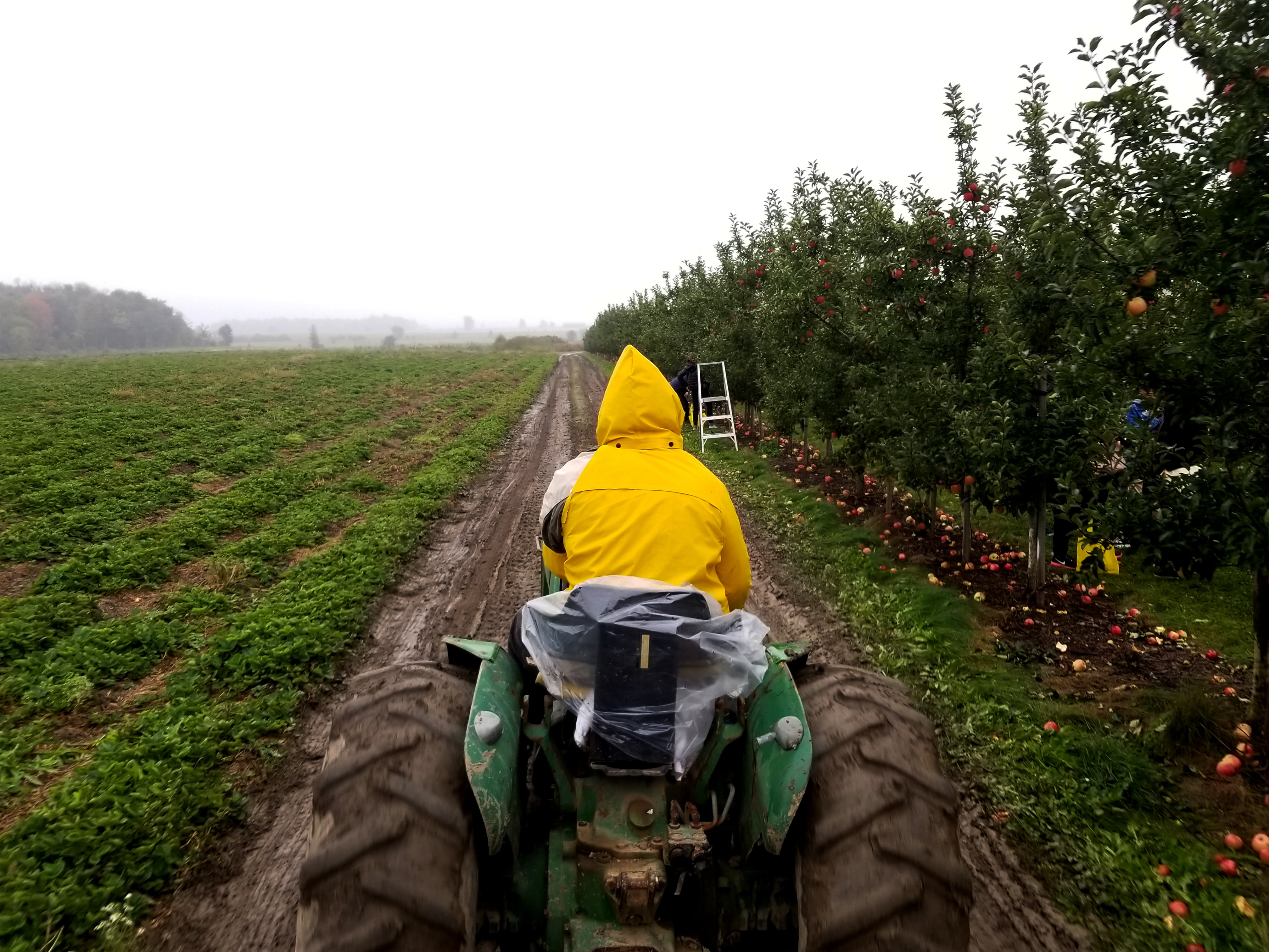 man riding tractor traveling road between plants during daytime