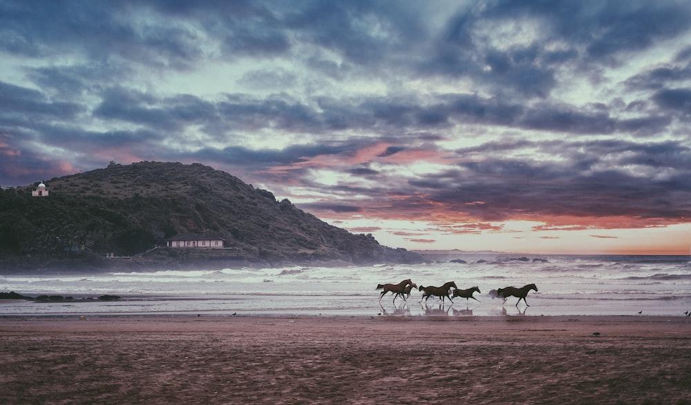 four black horses near sea during daytime