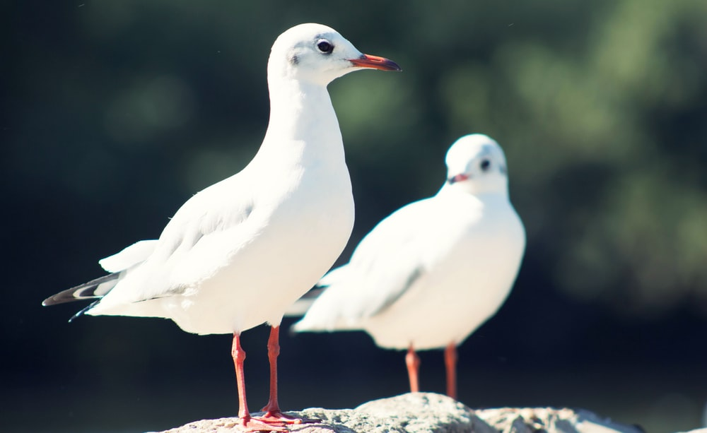 two white seagulls during daytime