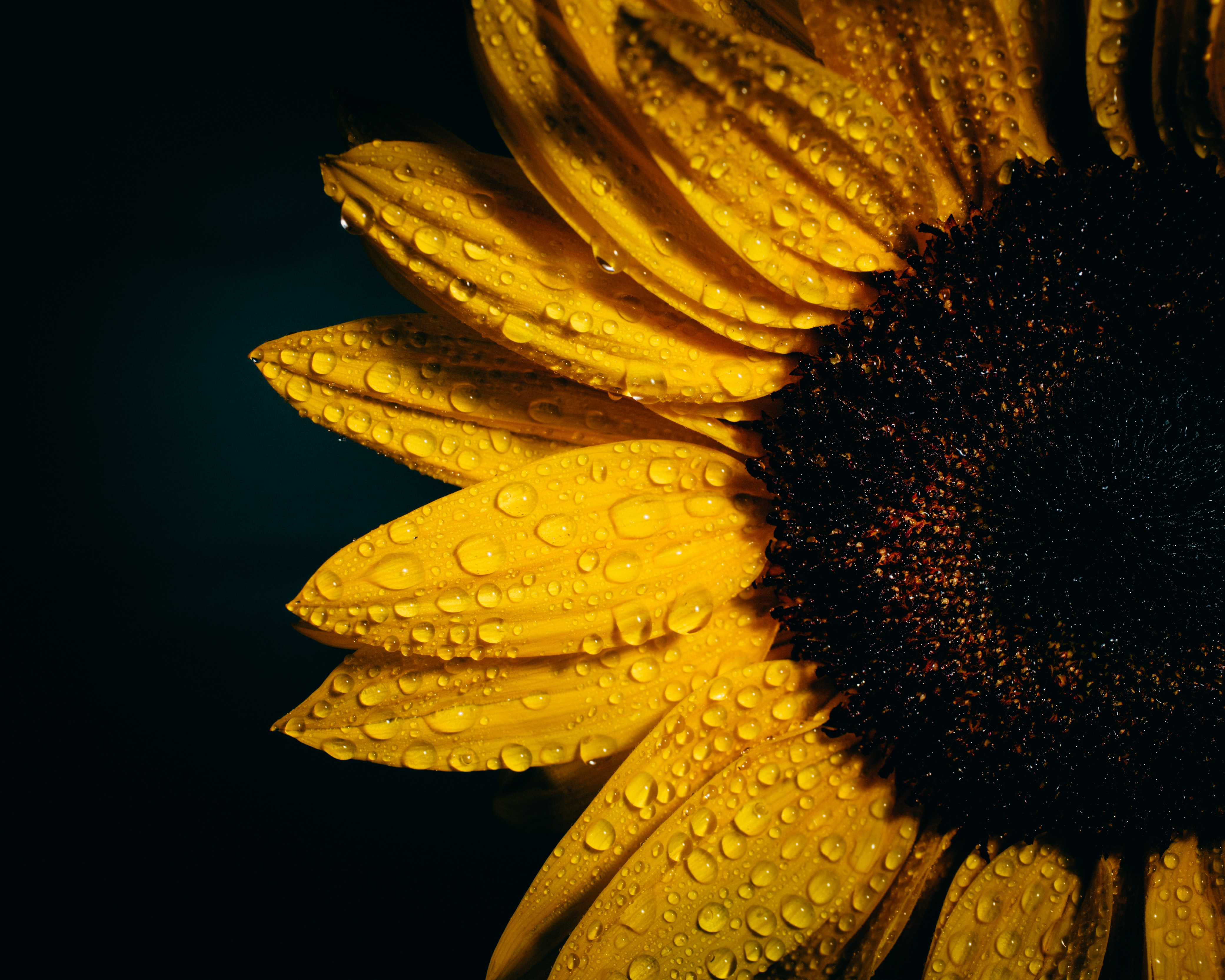 focus photography of sunflower