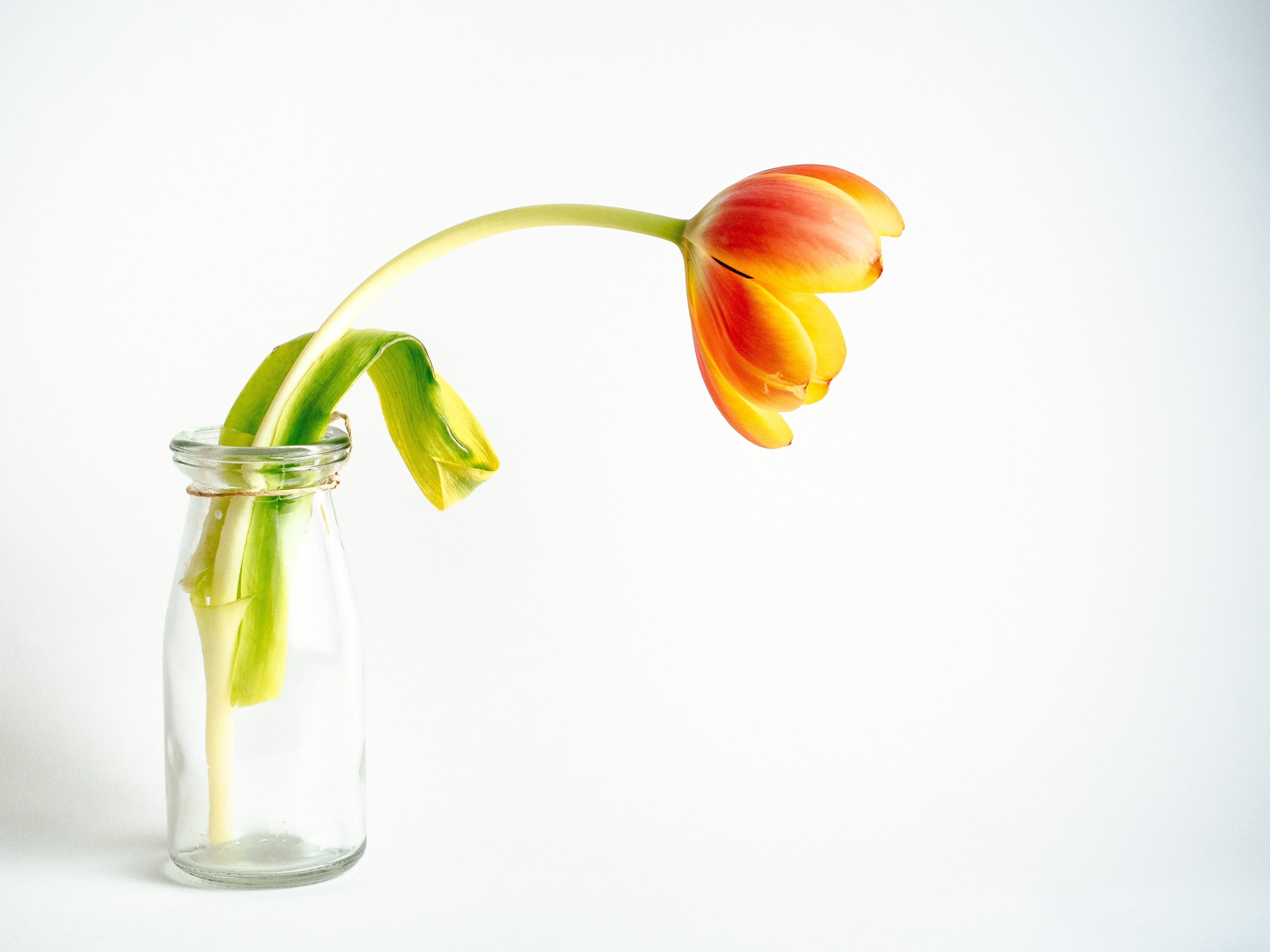 Lemonade flowers flowers stories