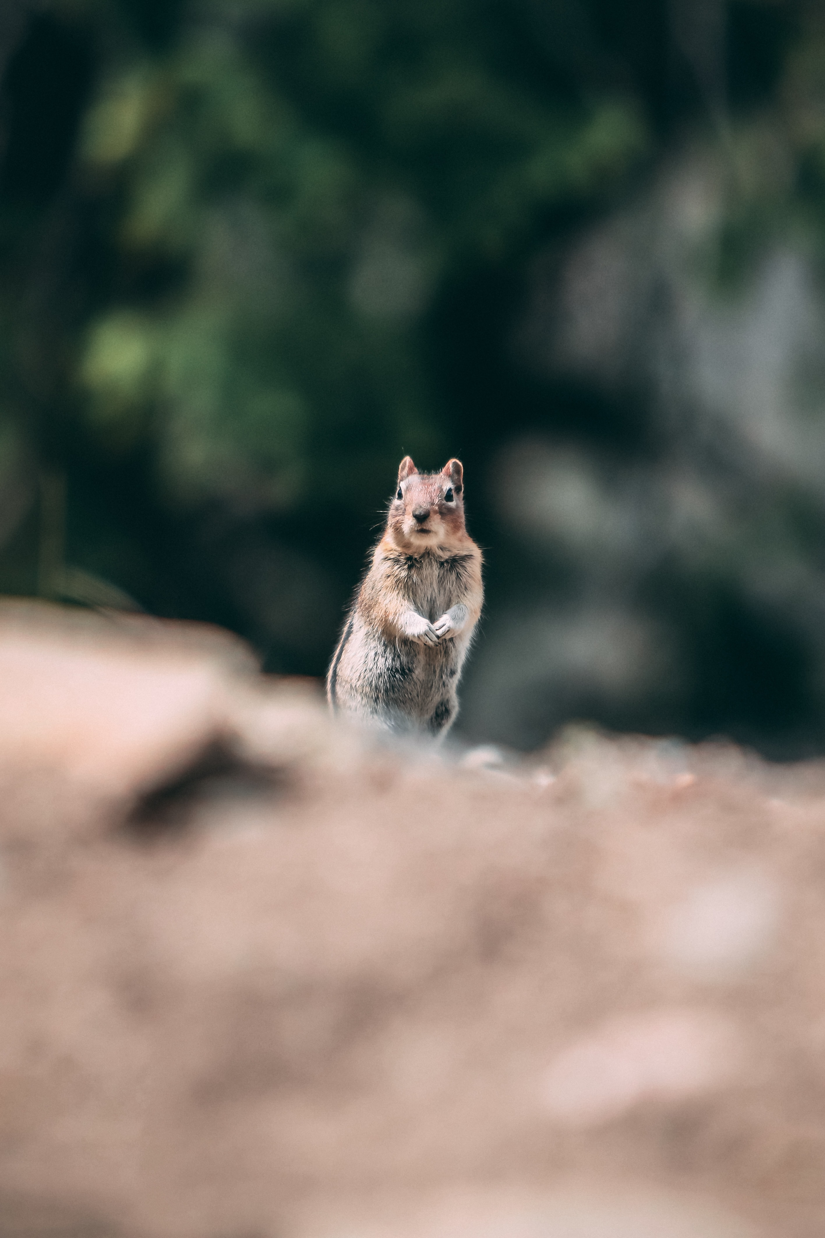 selective focus photo of brown squirrel on ground