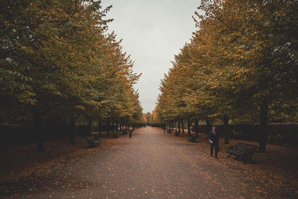 man walking beside park bench near trees