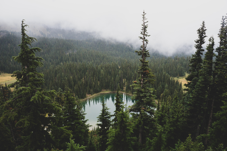 white fog over forest
