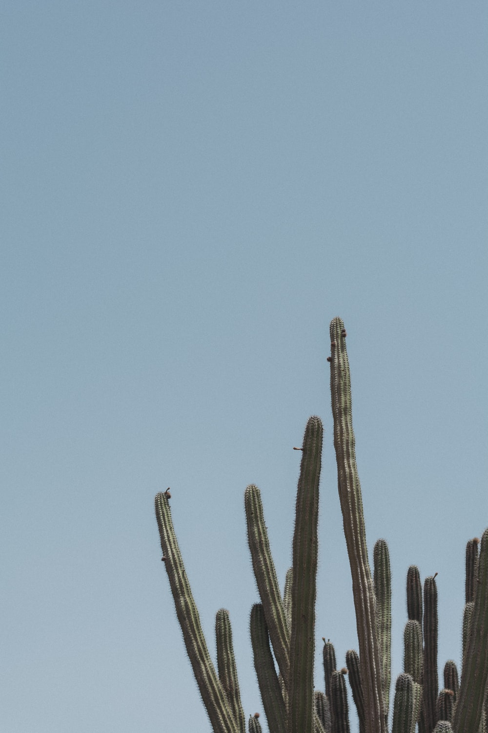 cactus during day