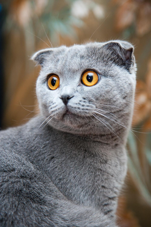 gray cat shallow focus