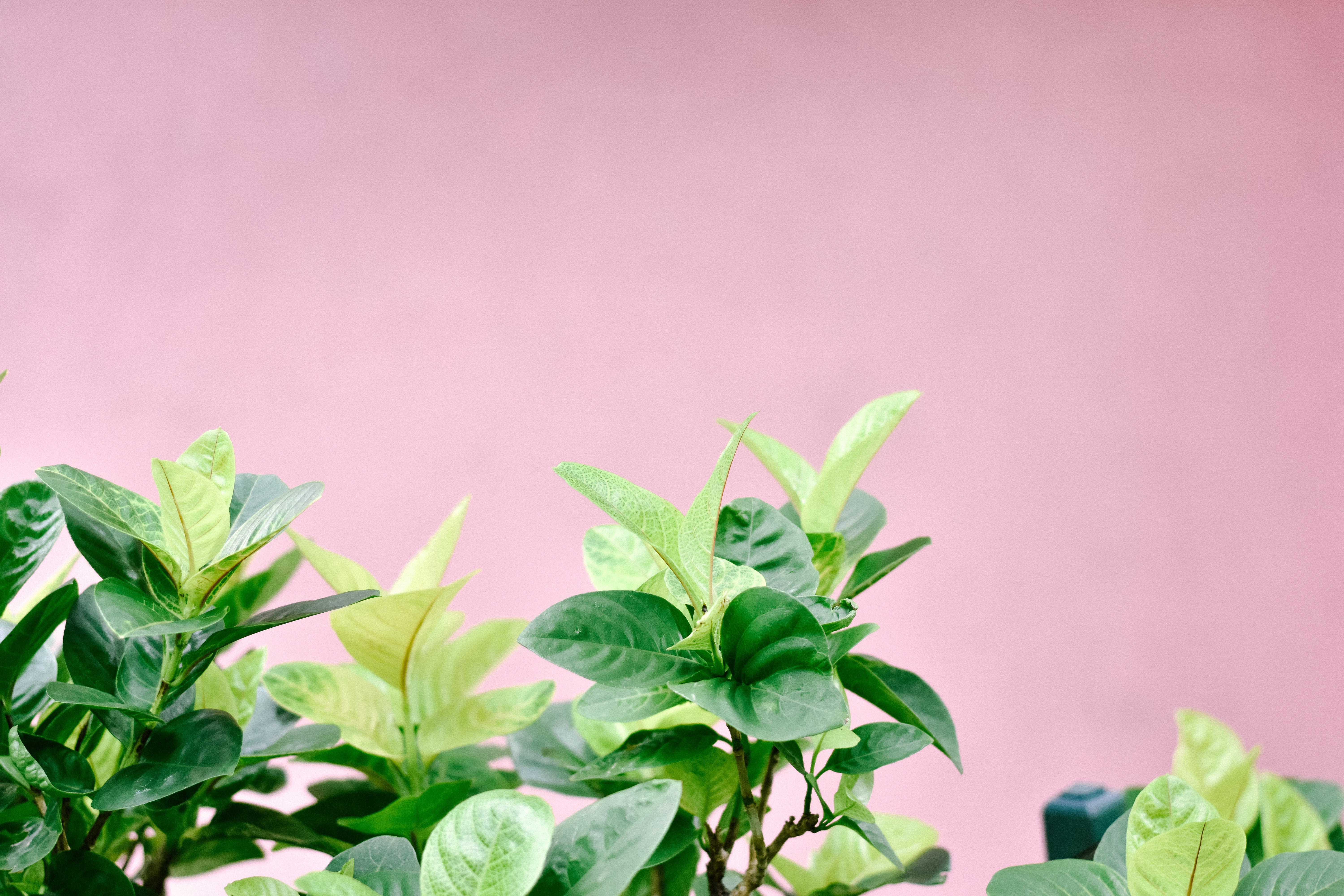 focus photo of green leafed plant