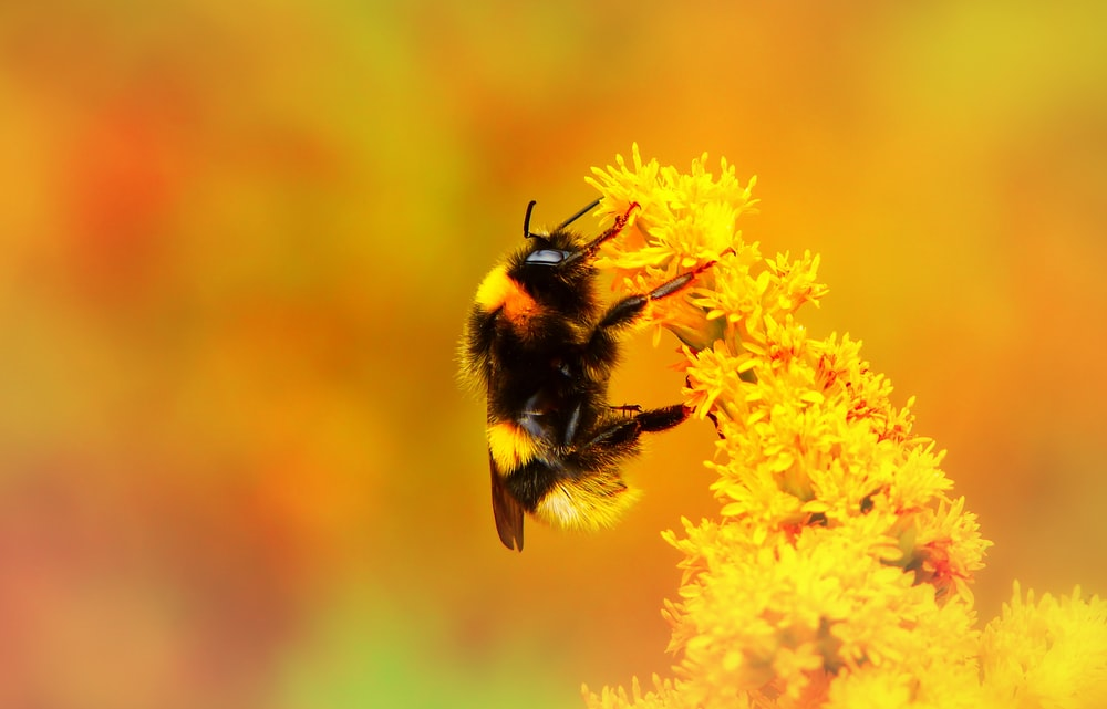 bee pollinating flower during daytime