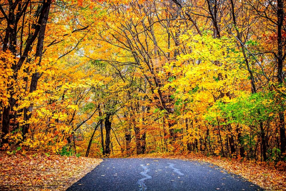 green trees beside road