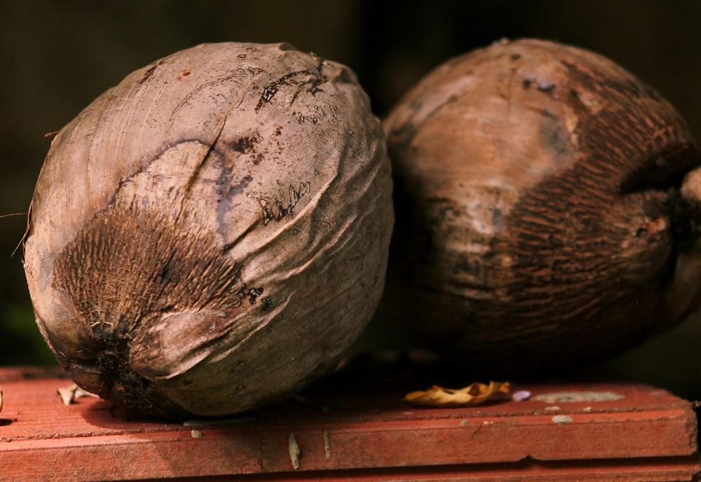 two withered coconuts