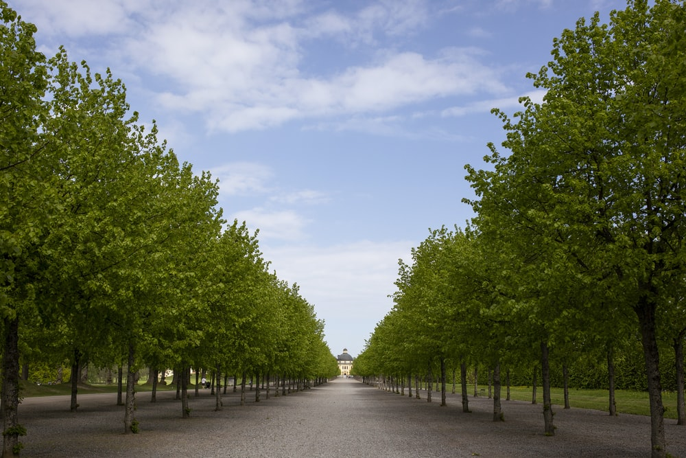 green-leafed trees