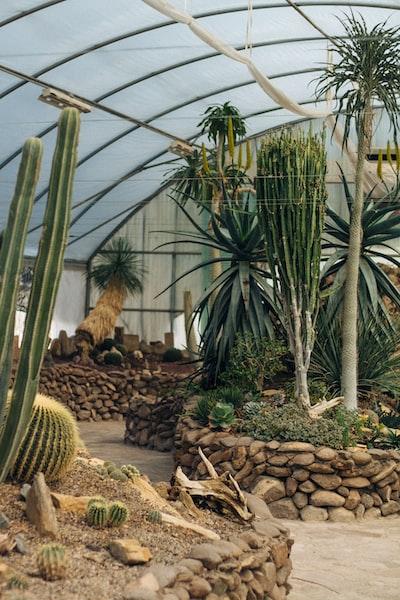 kaktusy-w-szklarni