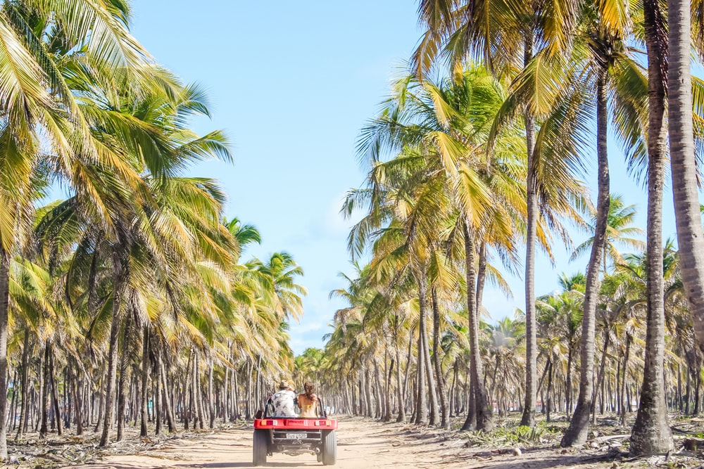 two person sitting ta back of vehicle viewing tall green coconut trees