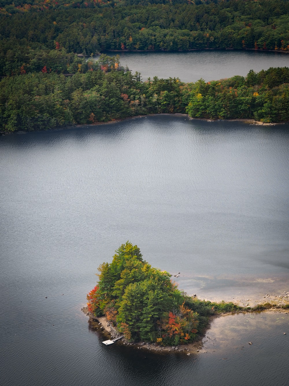 aerial view of green trees near body of water during daytime