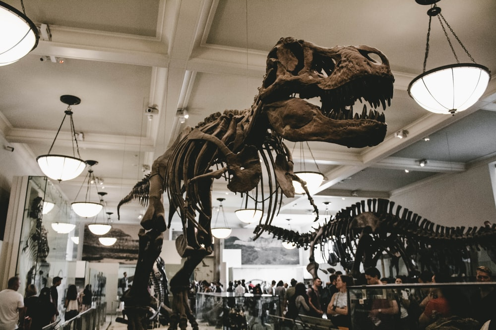 people standing besides dinosaur skeletons