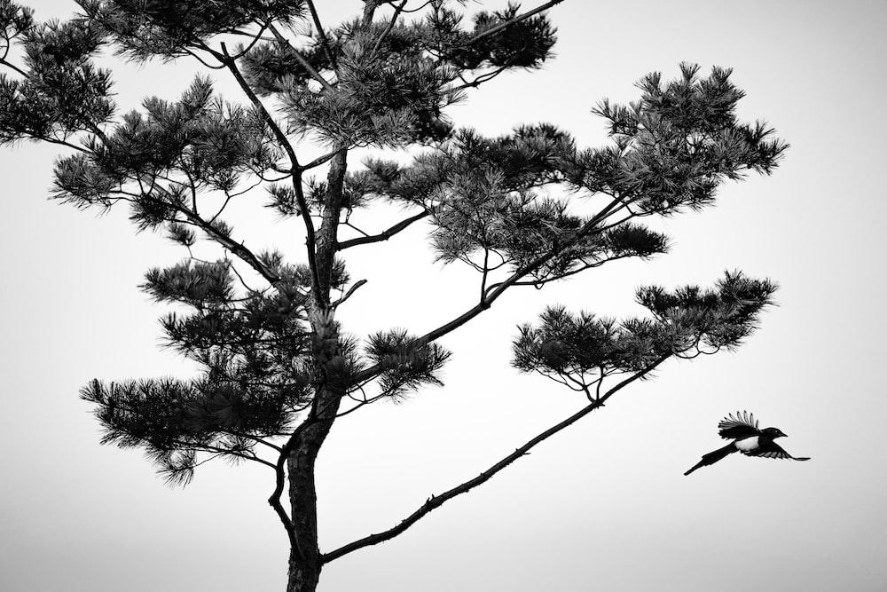 bird flying bear the tree