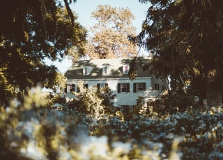 white and gray house in forest