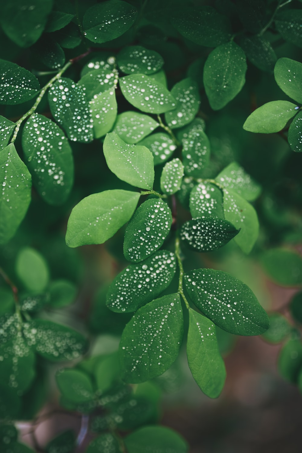 closeup photo of green leaf with water droplets