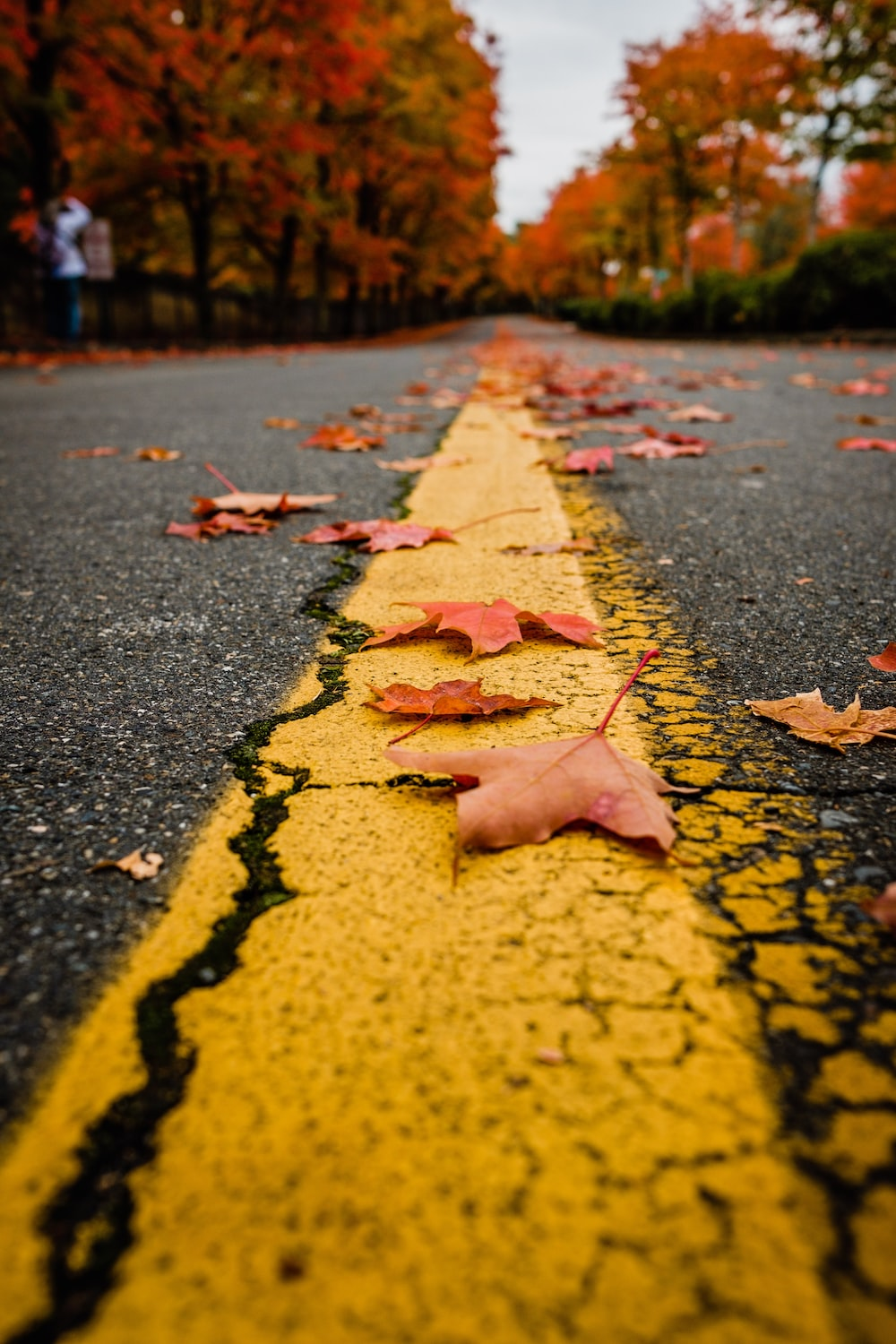 maple leaves on yellow and black concrete road during daytime