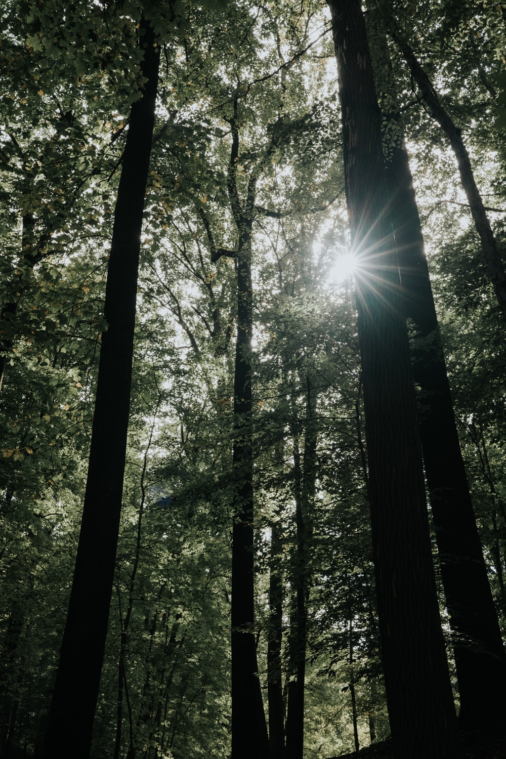 light through forest trees