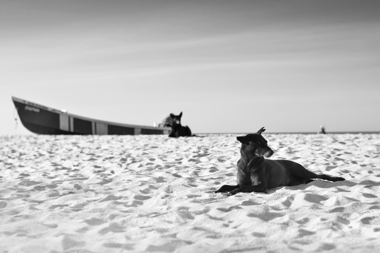 grayscale photography of dog lying on sand