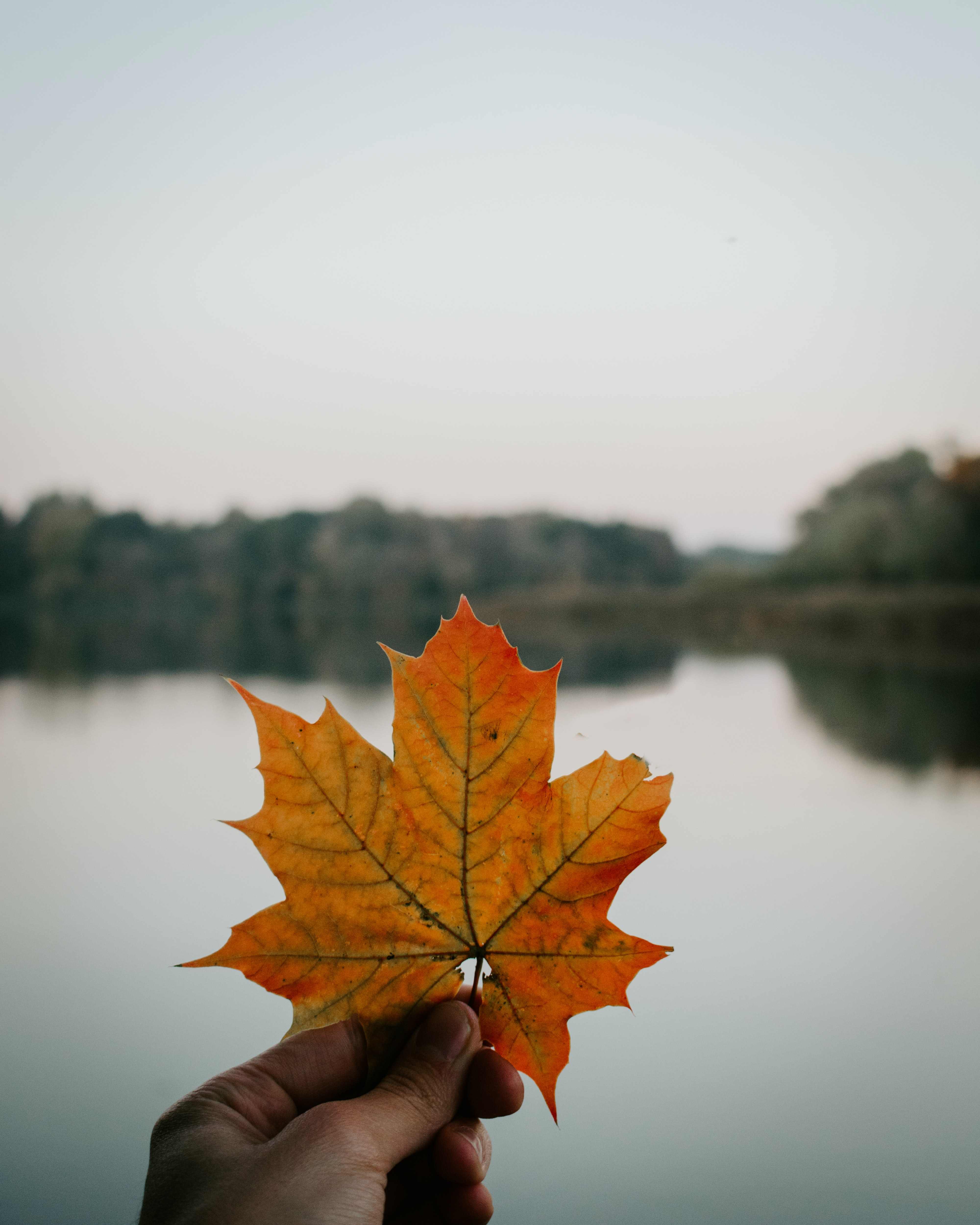 person holding autumn leef