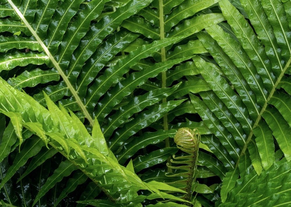 fill the frame photography green fern plant