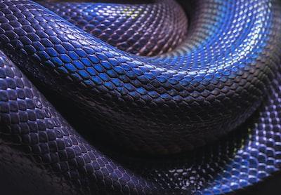 black snake closeup photo snake teams background