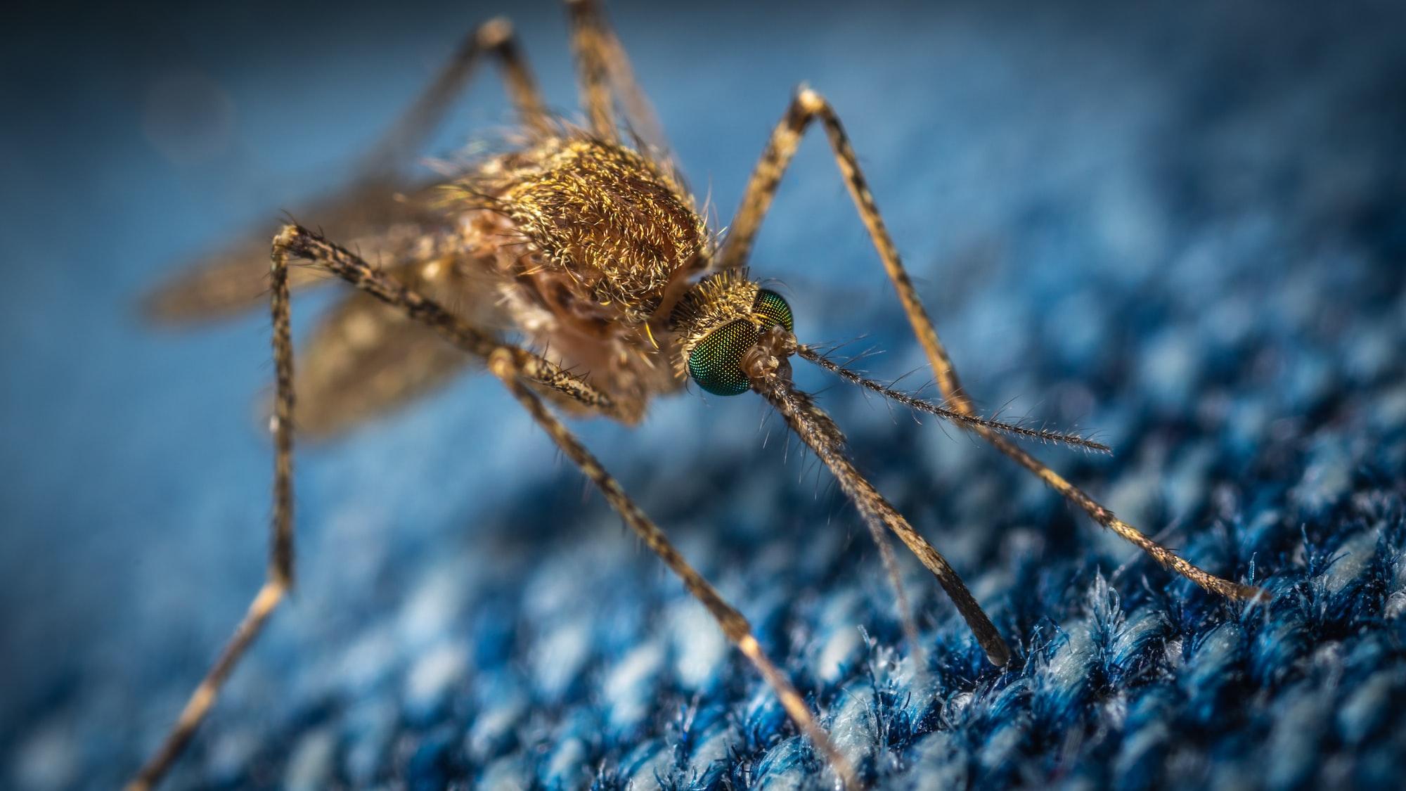 """🦠 Malaria """"stoppas helt"""" av mikrob"""