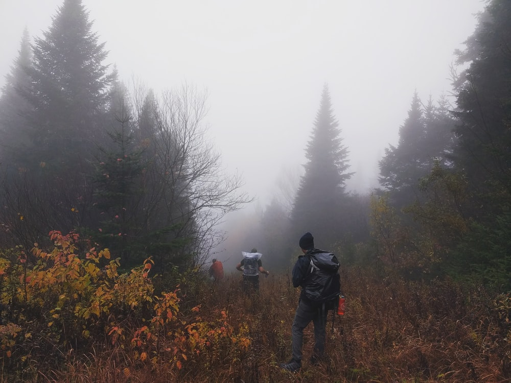 three men walking on forest