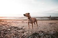 short-coated brown dog near beach