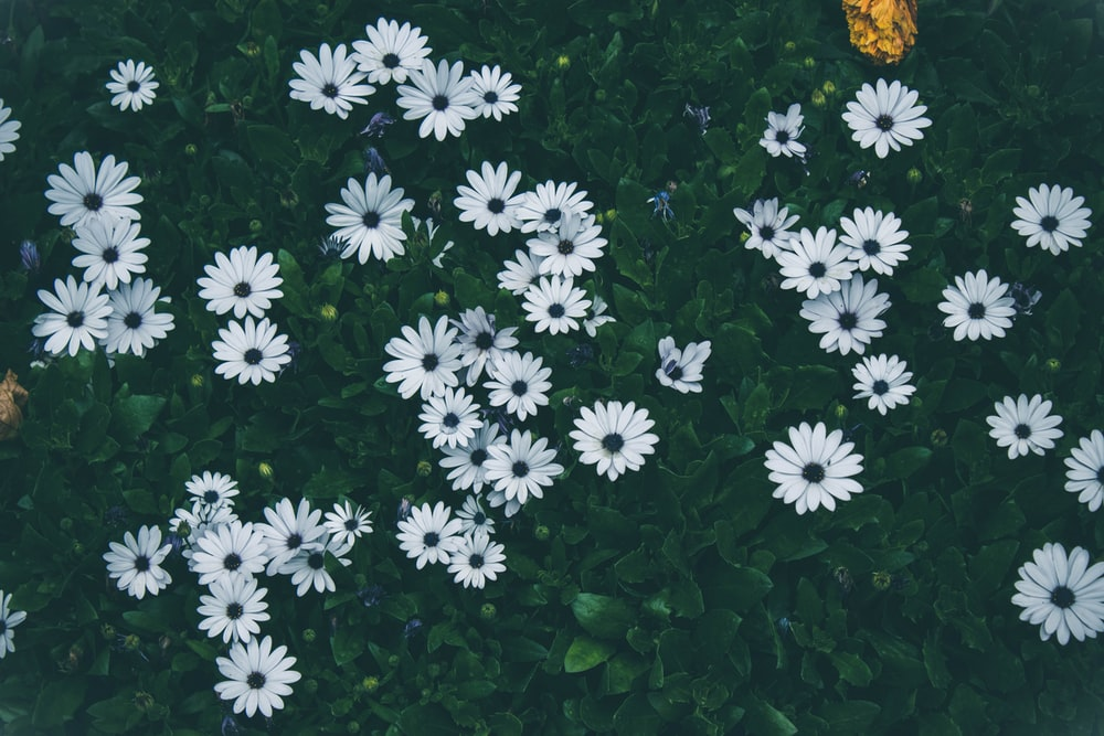 Spring flowers pictures download free images on unsplash spring flowers pictures mightylinksfo