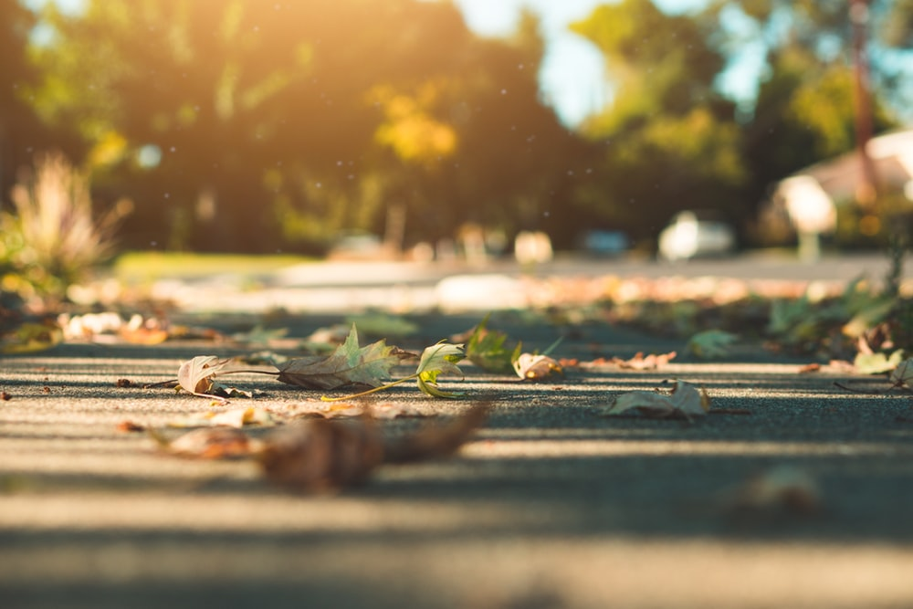shallow focus photography of fallen leaves