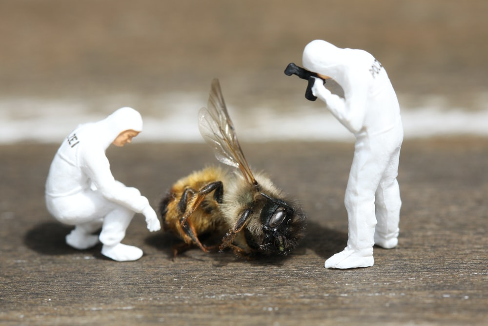 photography of two people taking photo of bee