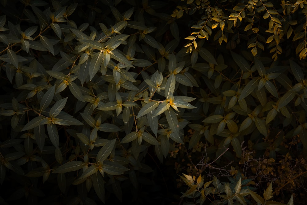 green leaf plants during night time