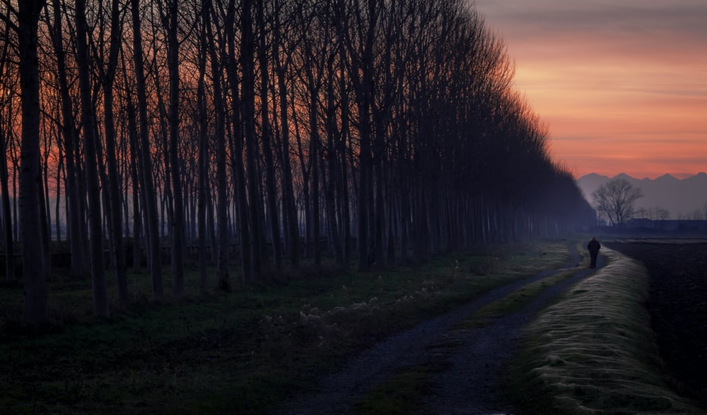 person walking on pathway beside bare trees