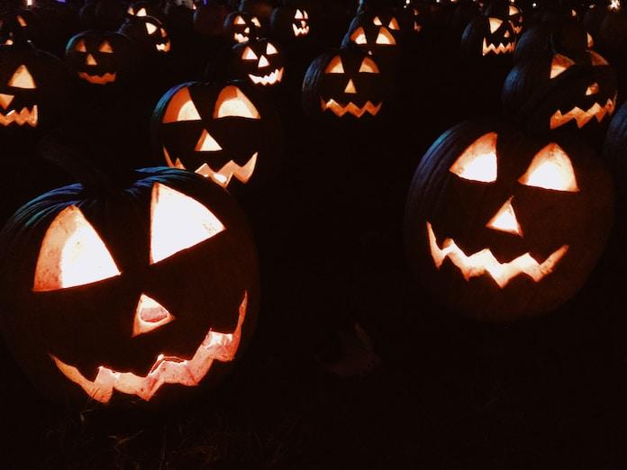 brown pumpkin lot