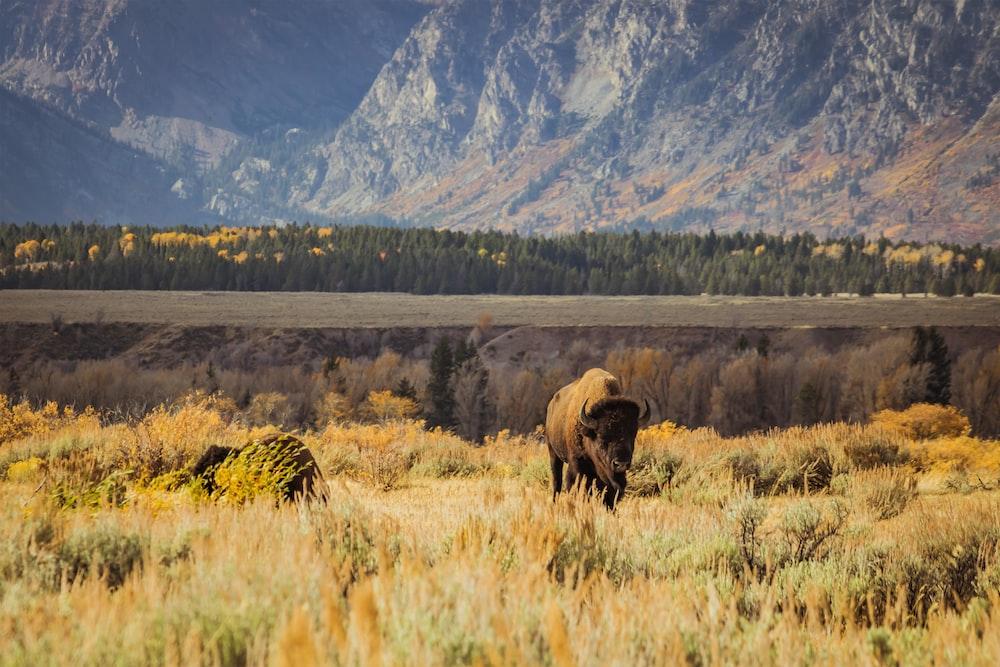 black rhino standing on field during daytime
